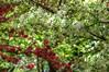 Crabapple Blooming Bokeh Kaleidoscope 3