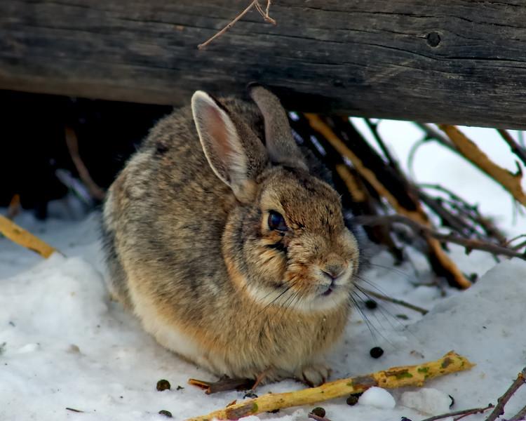 A Rabbit Warren Welcome