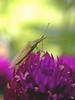 Flower Top Perch
