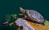 Turtle Romance