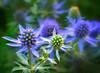 Blue-tiful Flora!