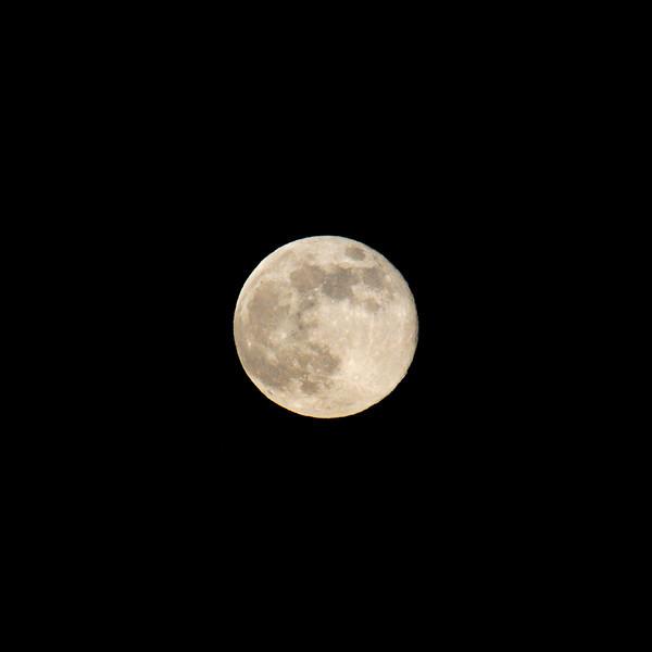 A Beaver Full Moon