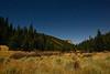 Moonlit Meandering Meadow