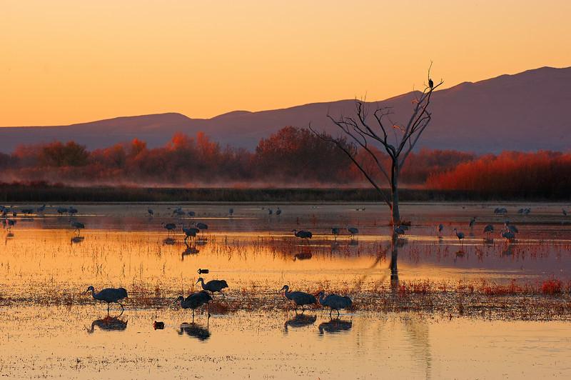 Dawn of the Crane