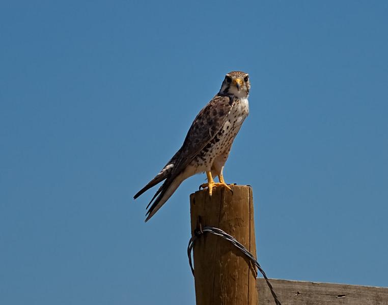 Central Shortgrass Prairie Sentinel