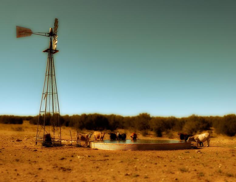 Cowboy Infinity Pool