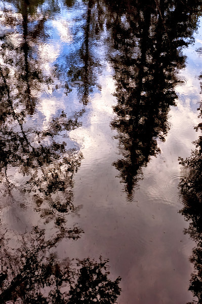 Forest Ripples