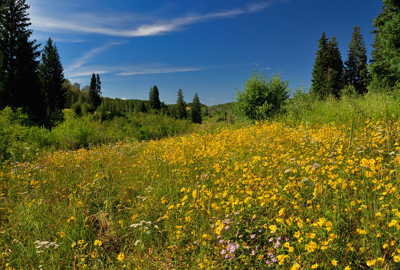Floral Profusion in the Elkhead Mountains