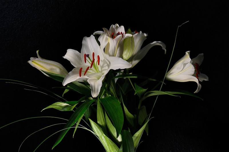 Lilies for Her