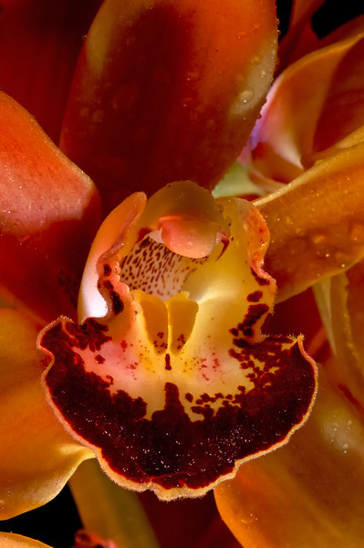 Secret World of the Orchid