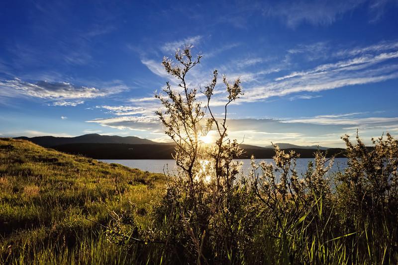 Mountain Mahogany Sun Seeding