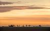 Colorado Front Range Farming