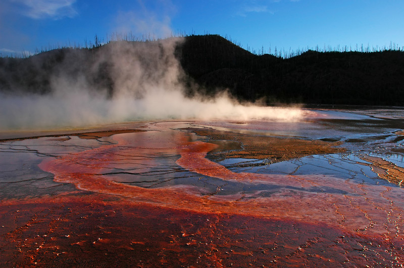 Grand Prismatic Paisley