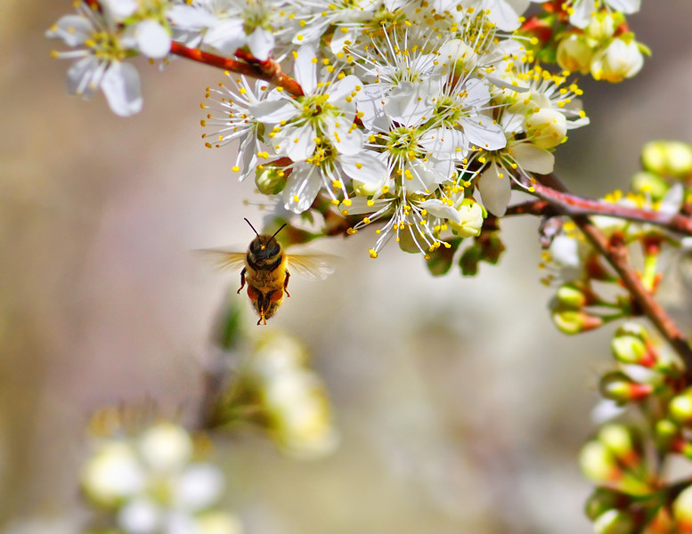 Bee Meditation