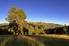 Mueller State Park: Montane Grassland to Ponderosa Pine