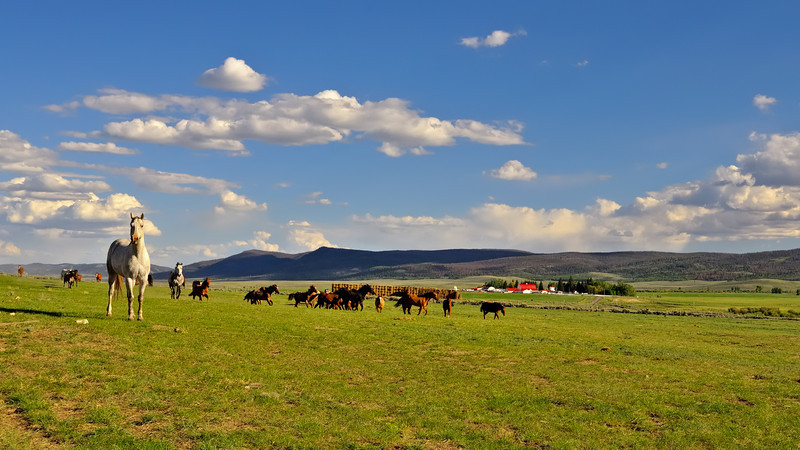 Dream Ranching