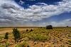 A Prairie Wildlife Reserve