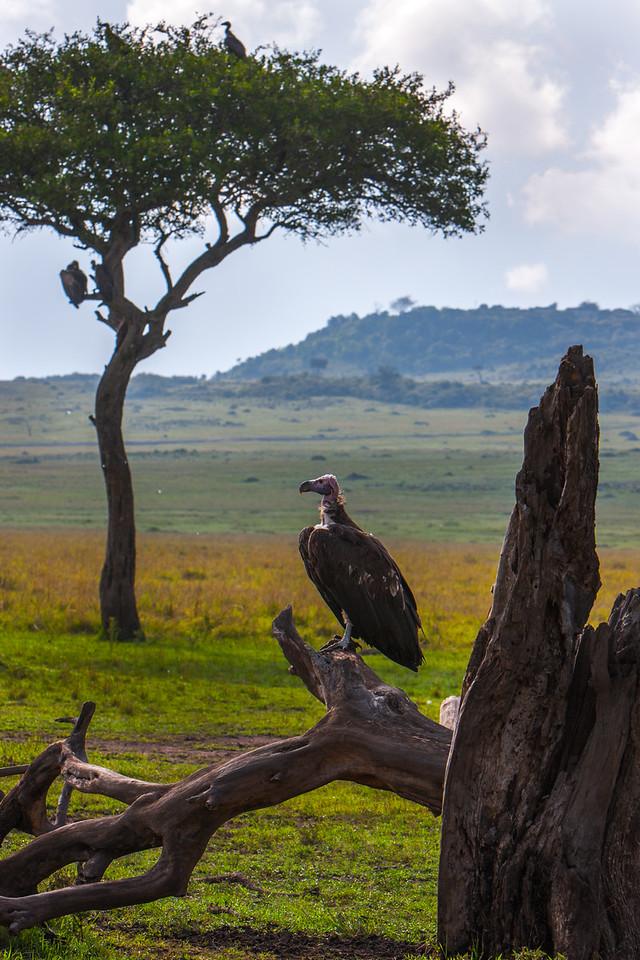 Kenya-oct-2008--3915