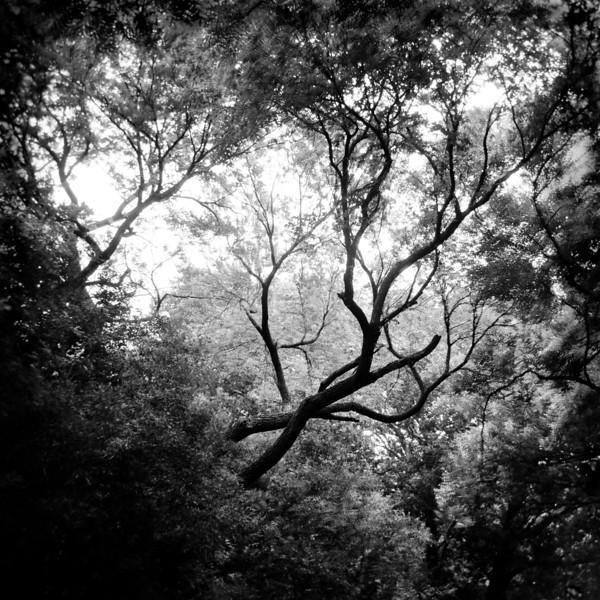 Reaching Heavenward (10)