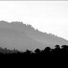 Carmel Valley in Timber Smoke