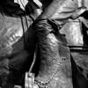 TX Trail - Vaquero Boots