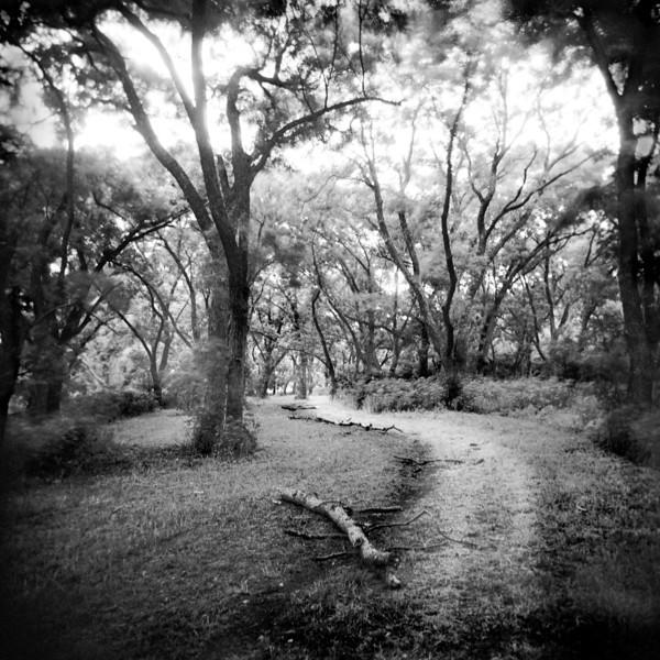 Pathways 4 (10)