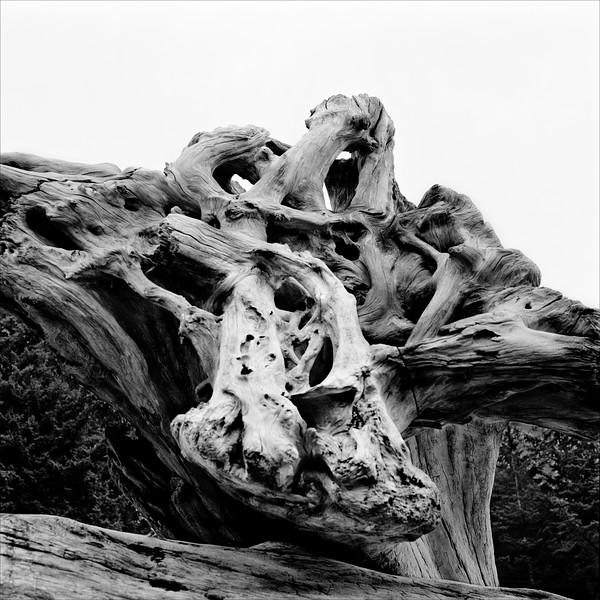 -Bones
