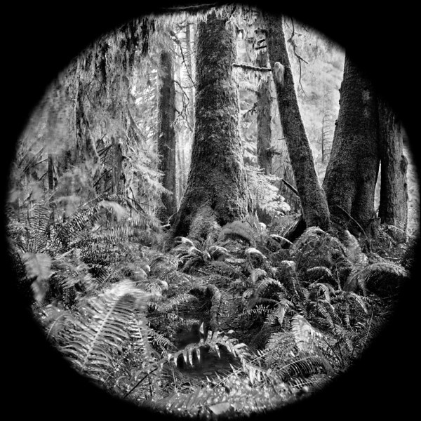 -Rainforest Ferns