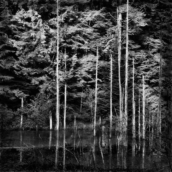 -Mystic Pond