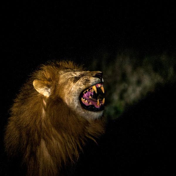 Kenya-oct-2008-4101