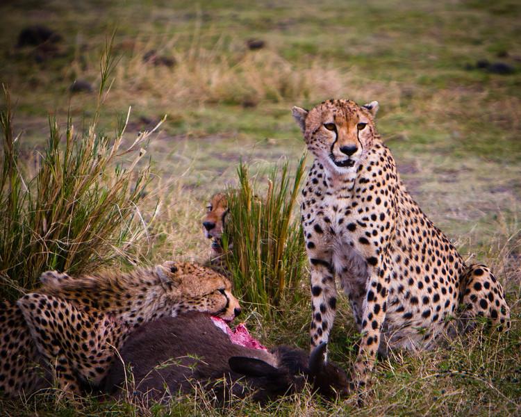 P_Safari_20071019_IMG_9301