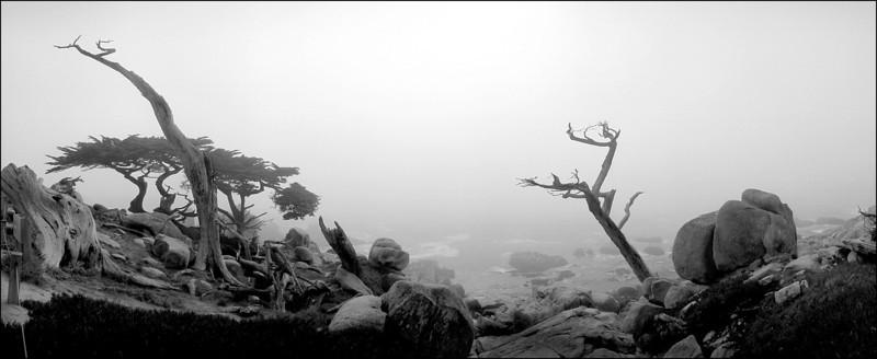 Pescadero Point 8
