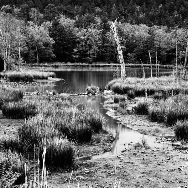 OKIE Wetlands 1