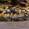 P_Safari_20071019_IMG_9247