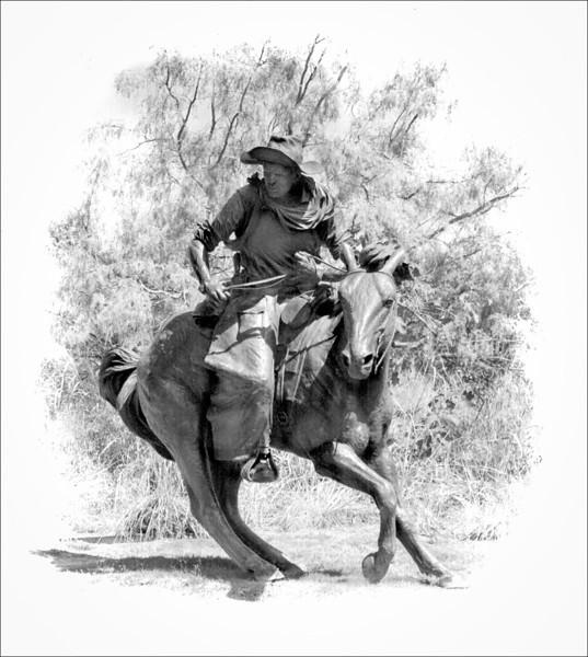 TX Trail - The Cutter