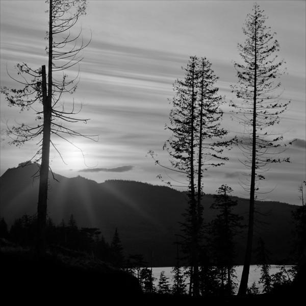 -Cold Light