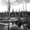 -Saguaro Wetland