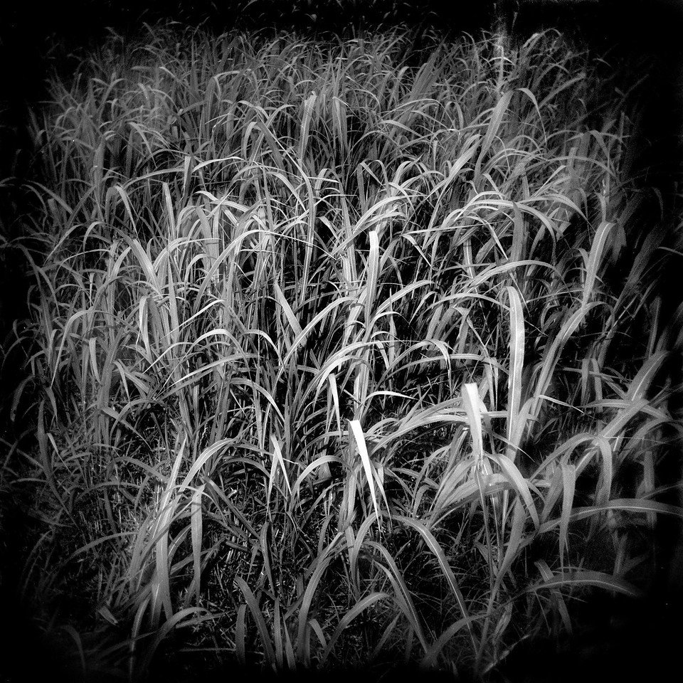 Open Prairie (10)