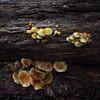 fungi - 1630