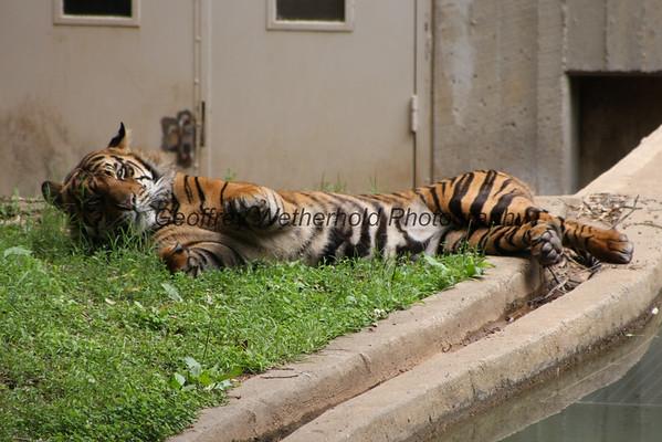6/28/15 - National Zoo