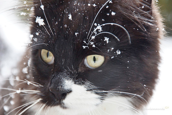 Can i come in now - board of this white stuff