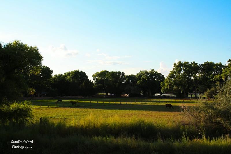 Corrales Pasture