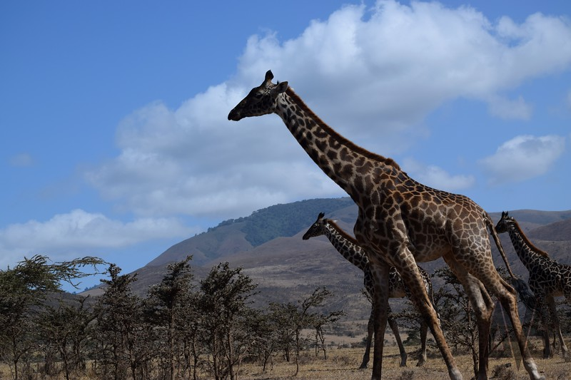 Ngorongoro Crater. Tanzania, 2014