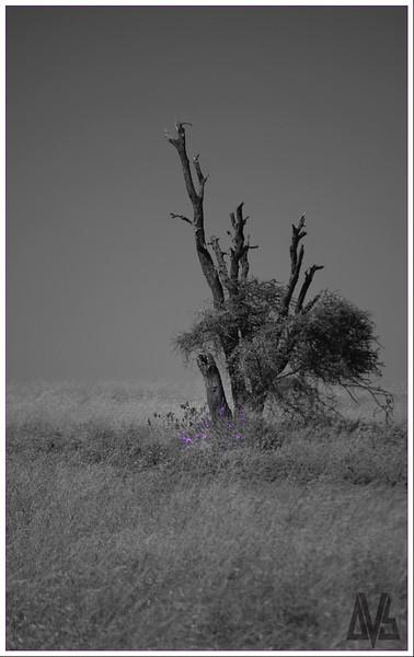 Violet Serengeti