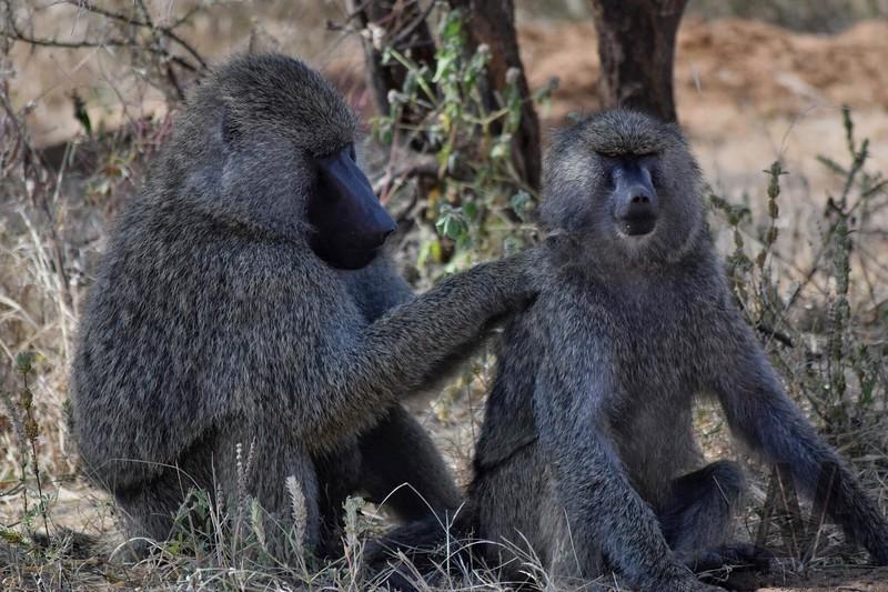 Tarangere National Reserve and Around. Tanzania 2014