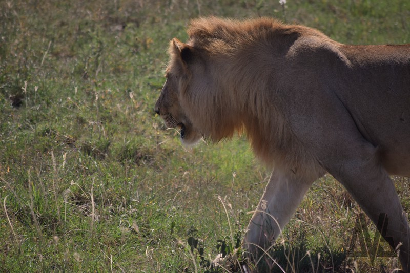 Rongo Camp.Serengeti. 2014