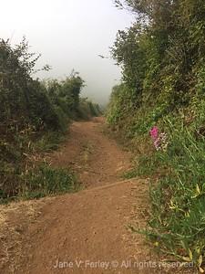 Tennessee Valley Beach Trail