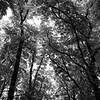 Des Branches d'Arbes 1