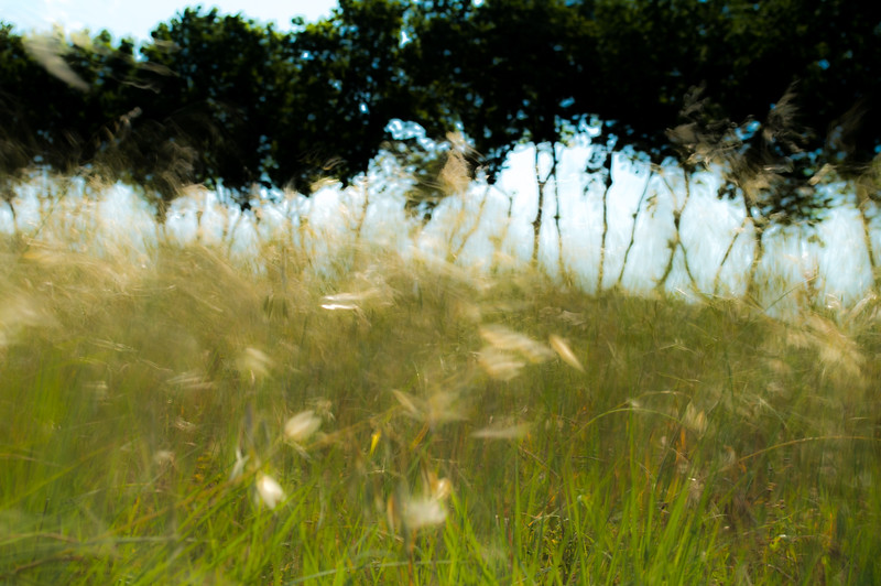 Plane Trees and Grasses