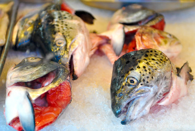 San Francisco FISH HEADS